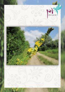 תמצית פרחי באך מספר 1 - אגרימוני, אבגר צהוב